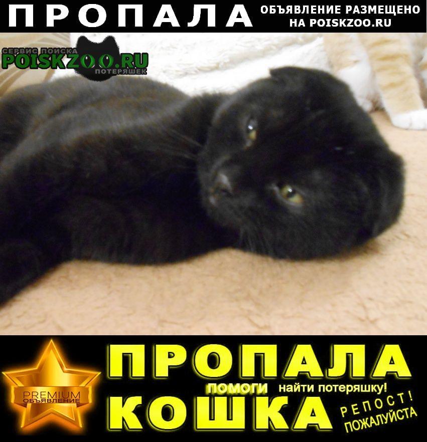 Пропала кошка Томск