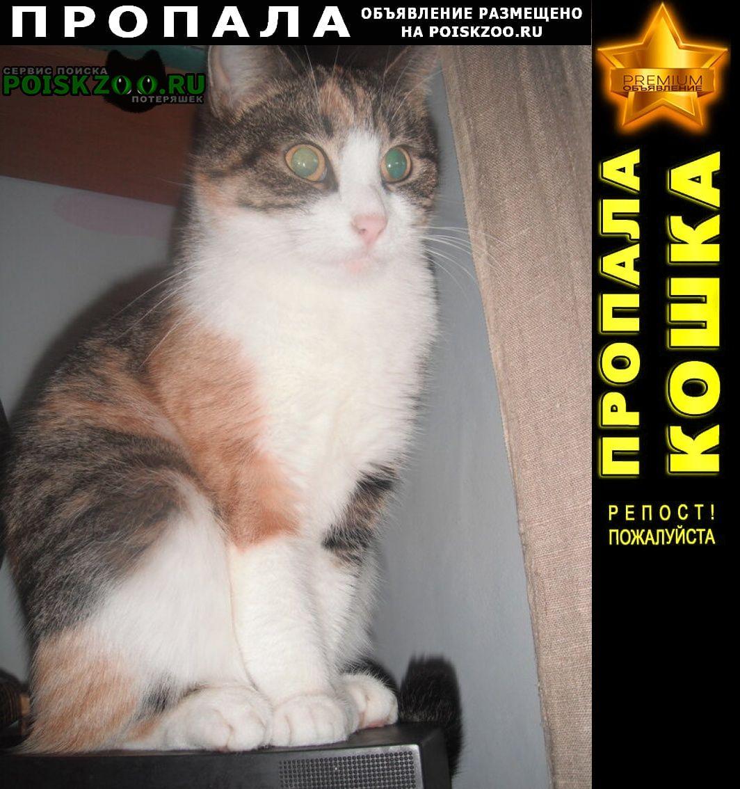 Пропала кошка 12 лет. кирюша. проспект энергетиков г.Санкт-Петербург
