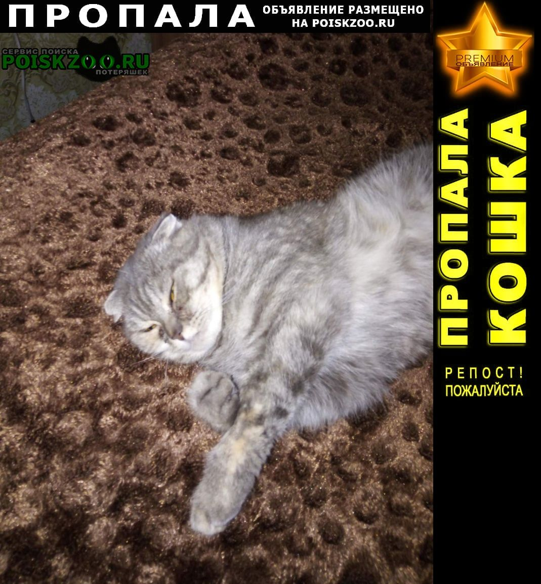Пропала кошка Серпухов