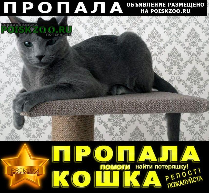 Пропала кошка кот, персей Ярославль