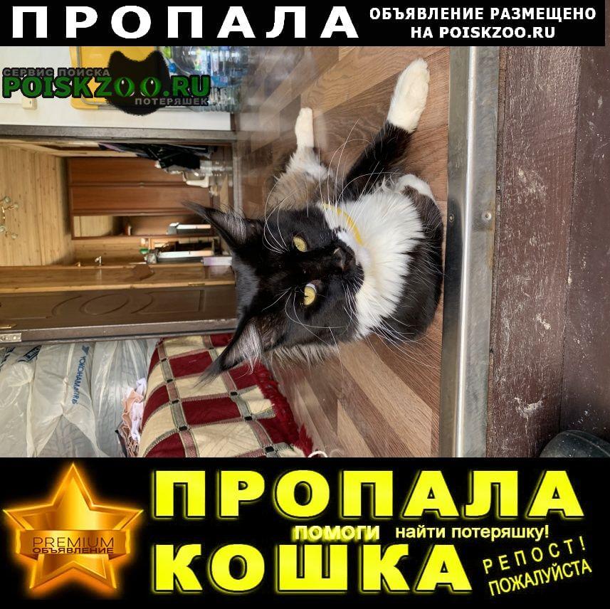 Пропала кошка снт мосгаз- 2 Руза