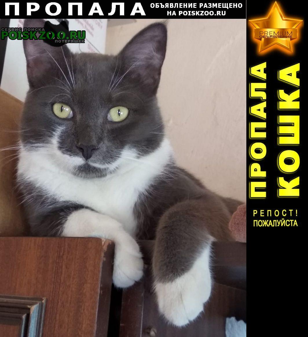 Пропала кошка Рязань