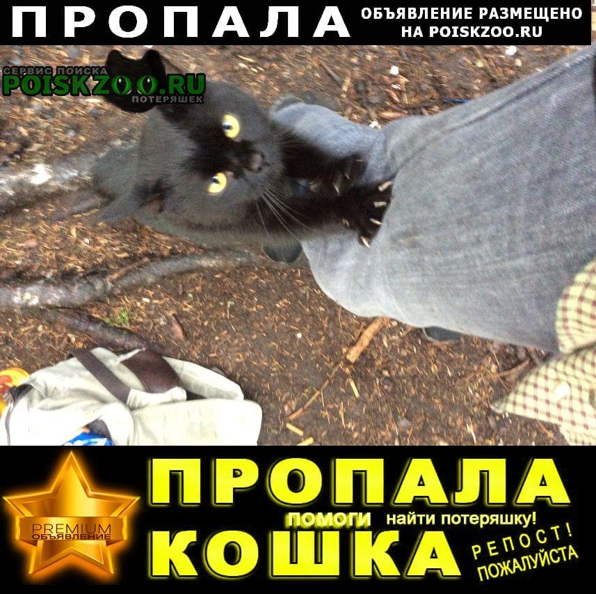 Пермь Пропала кошка бездомный чёрный кот ищем хозяев.