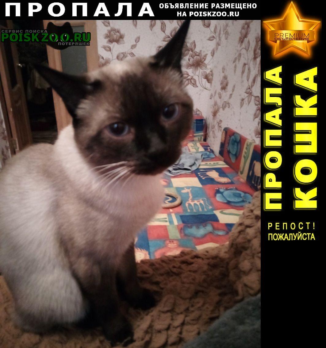 Пропала кошка тайский кот с коротким хвостом. Батайск