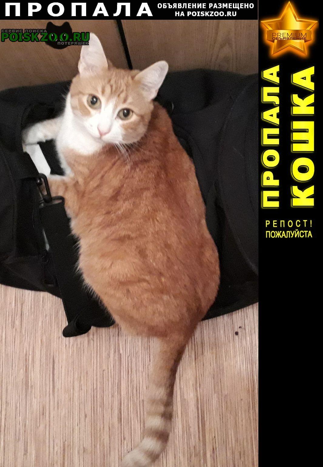 Куровское Пропала кошка