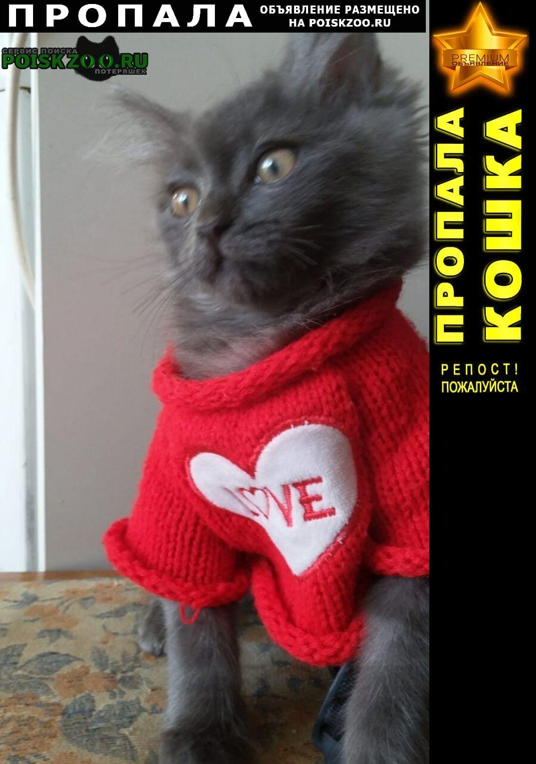 Ставрополь Пропала кошка сегодня котёнок возле садика