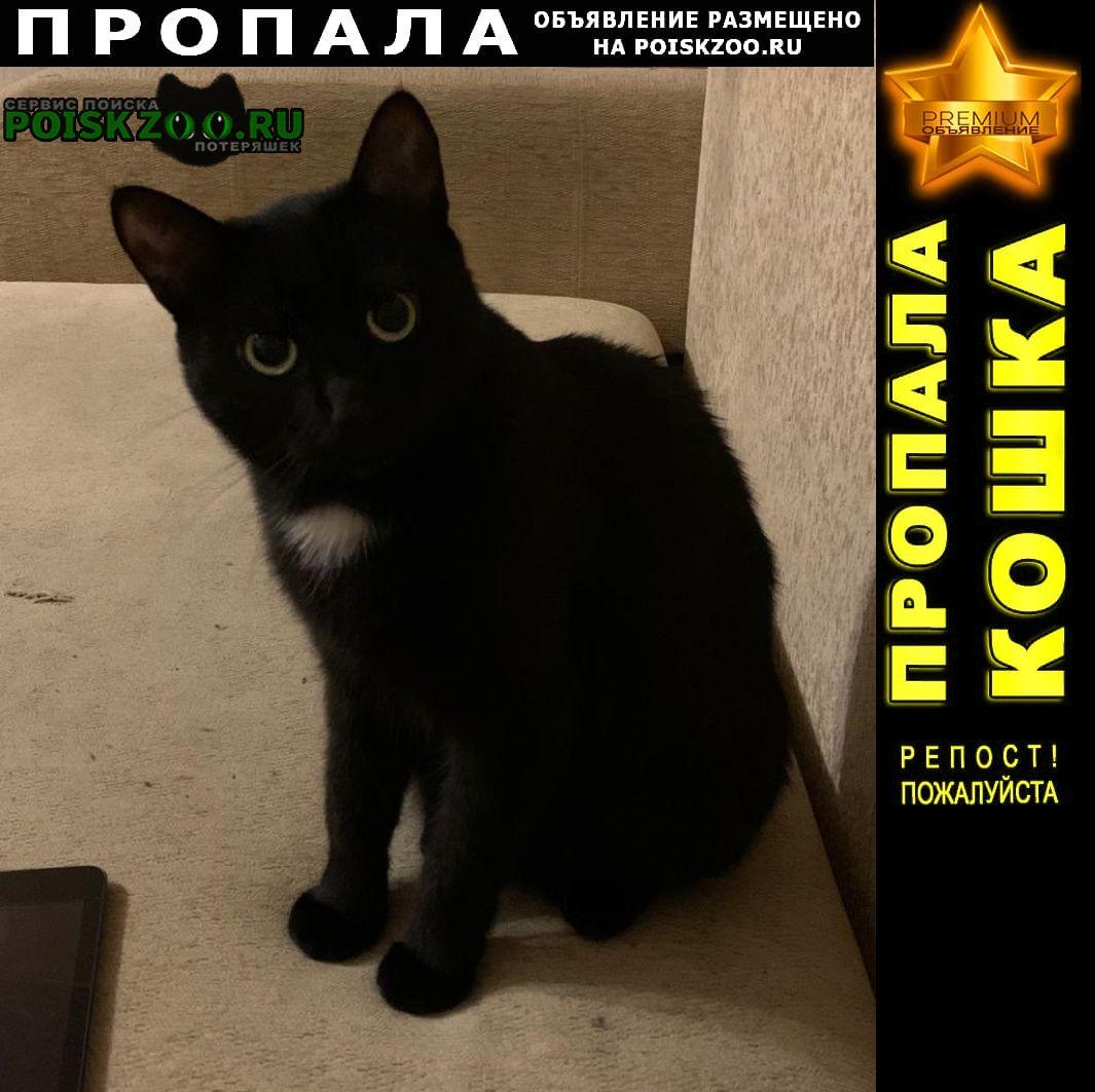 Пропала кошка черная с белой грудкой Балашиха