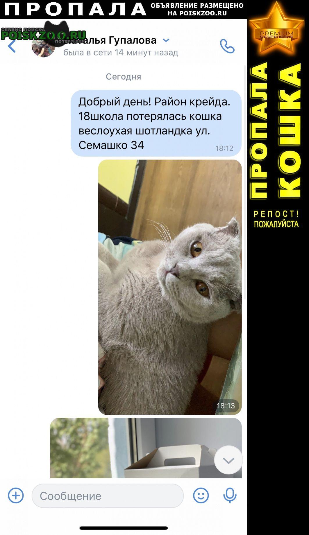 Пропала кошка Белгород