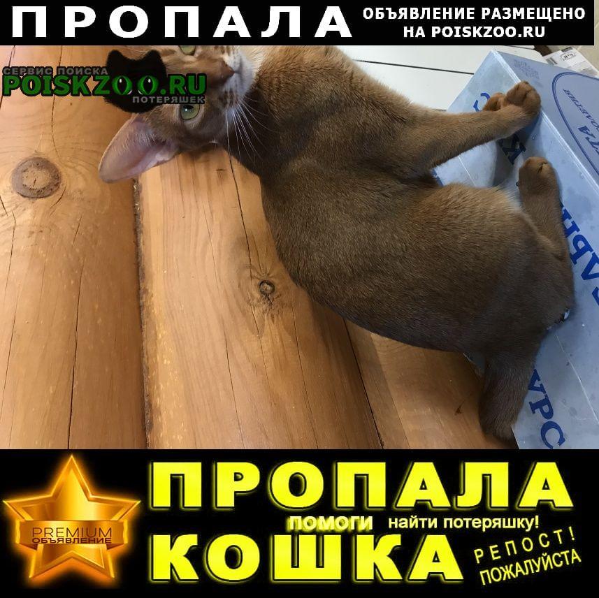 Пропала кошка абессинская сорель полтора года Москва
