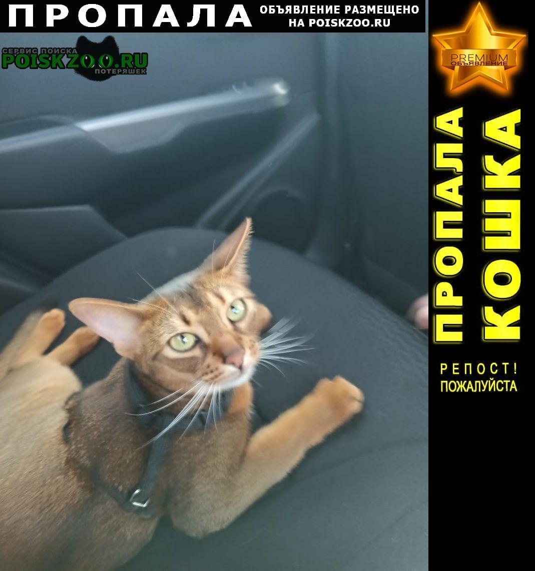 Барыбино Пропала кошка абиссинской породы