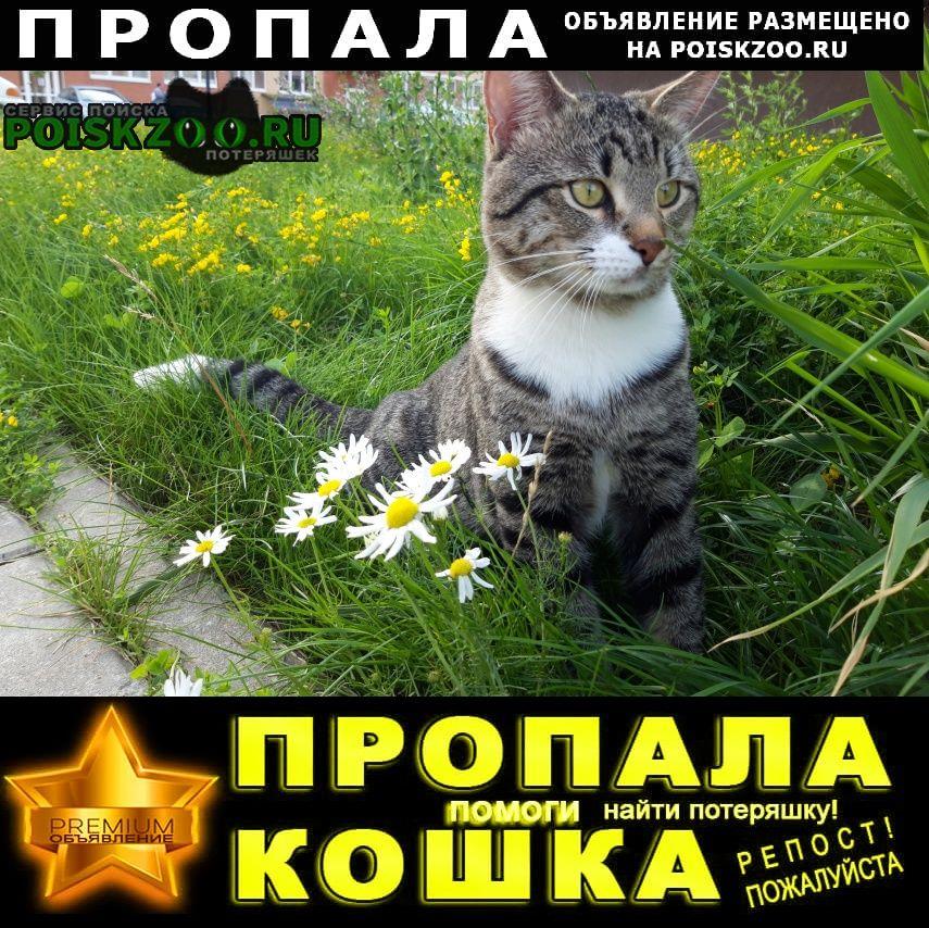 Пропала кошка кот Истра