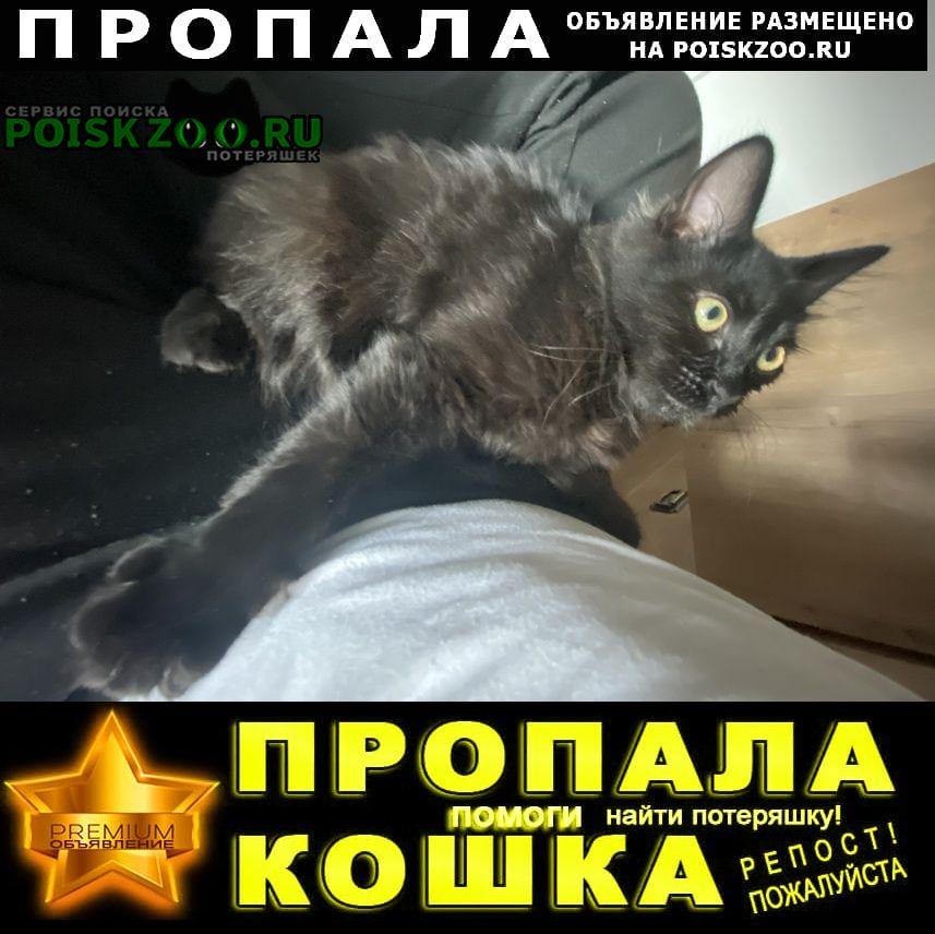 Руза Пропала кошка чёрный кот