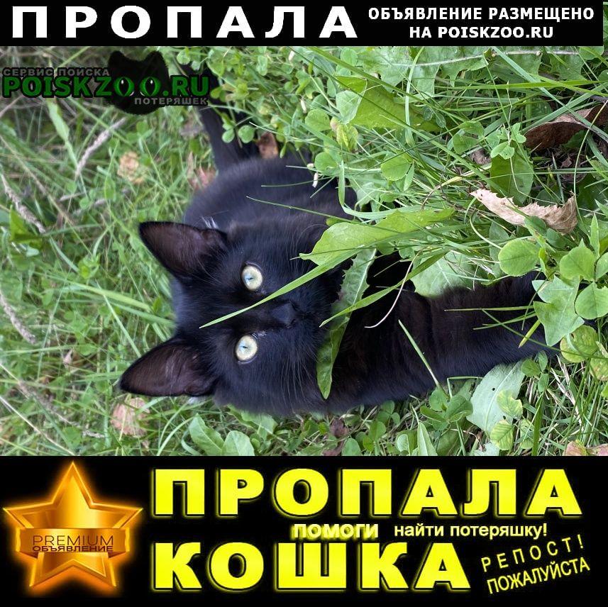 Пропала кошка чёрный кот Москва