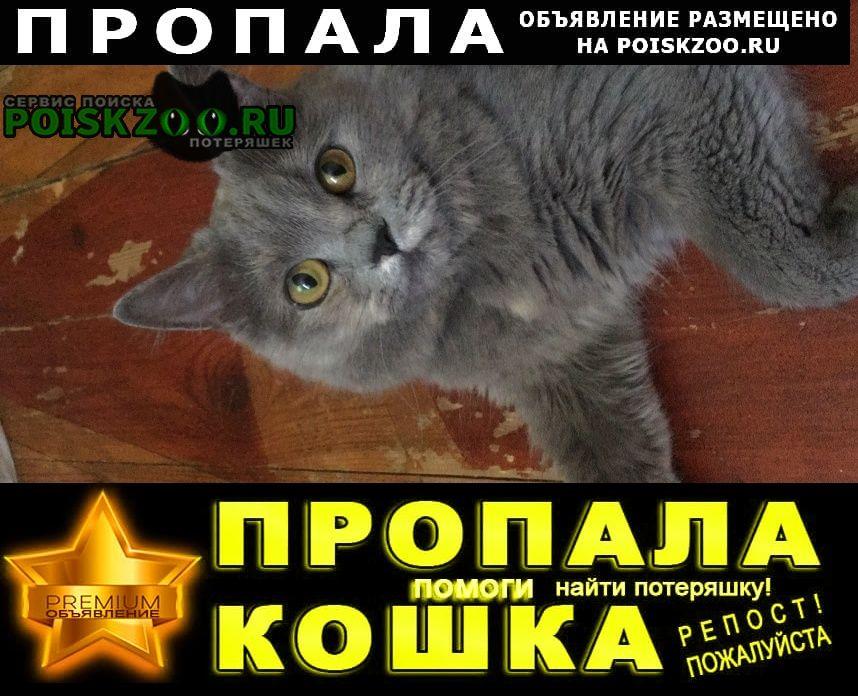 Зеленогорск (Ленинградская обл.) Пропала кошка 5 сентября с проточного пе