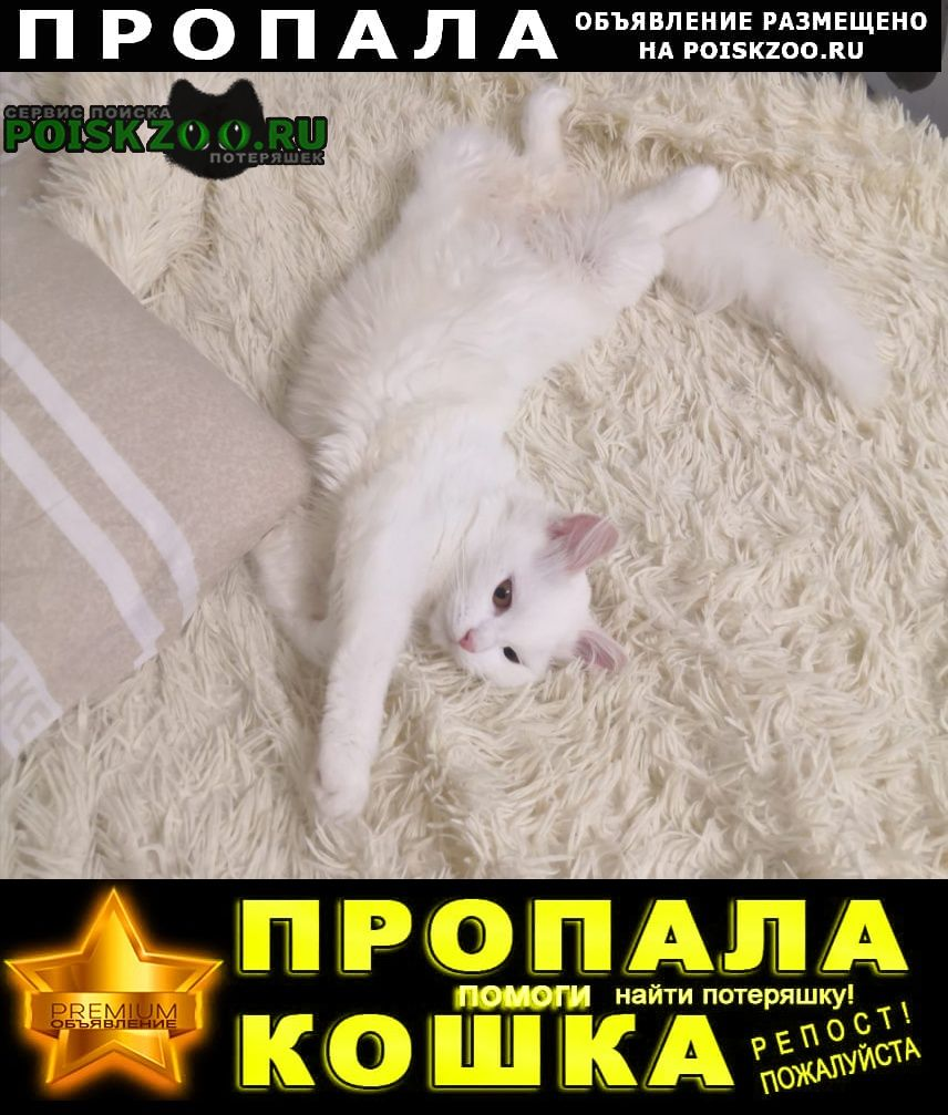 Пропала кошка Александров