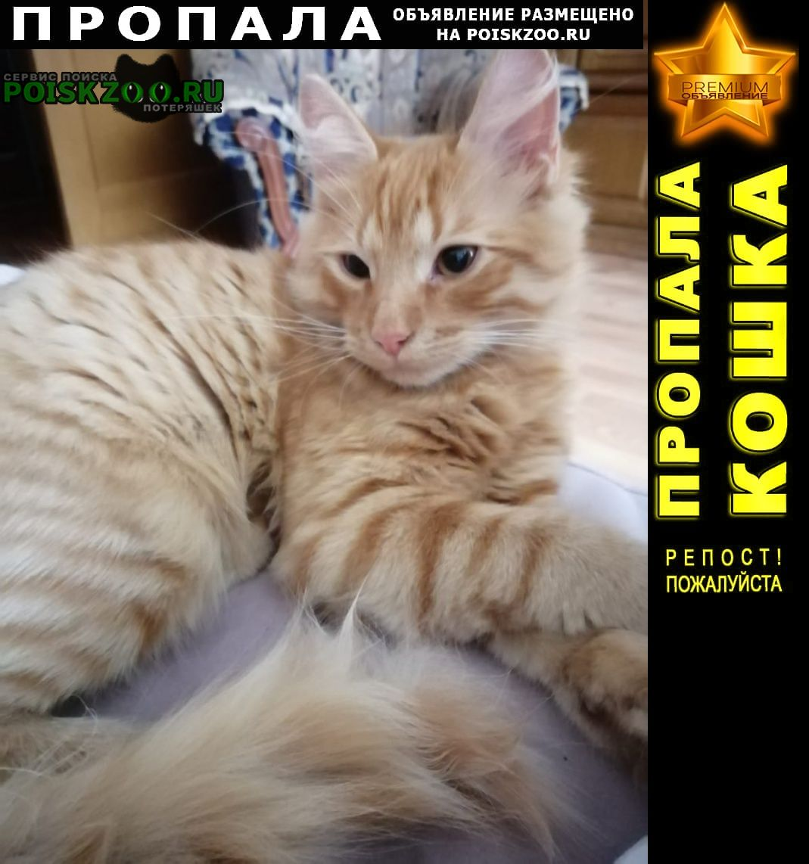 Брянск Пропала кошка рыжий кот 15.09