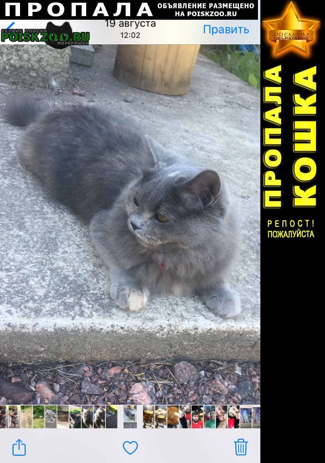 Пропала кошка Зеленогорск (Ленинградская обл.)