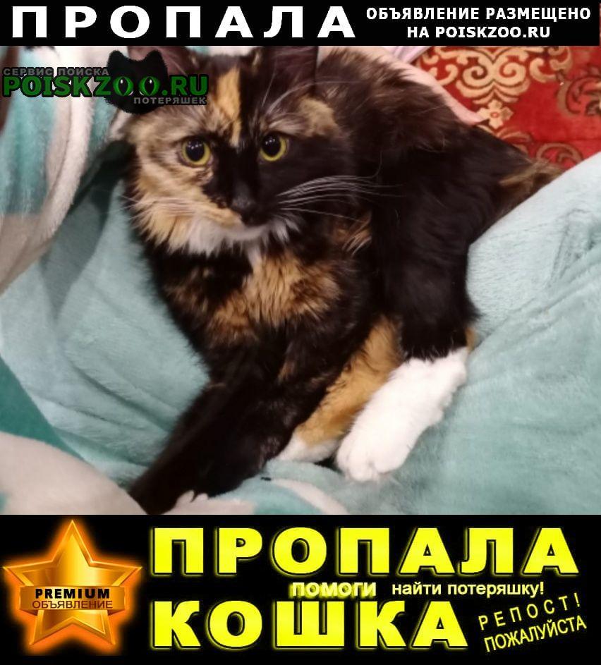 Тула Пропала кошка