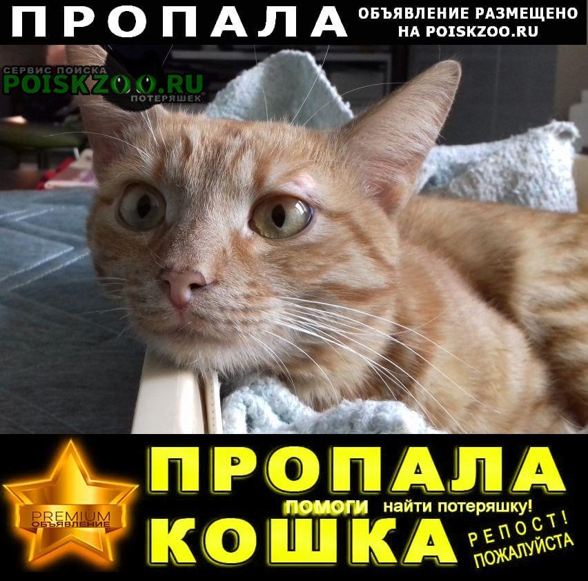 Пропала кошка рыжий кот Воронеж
