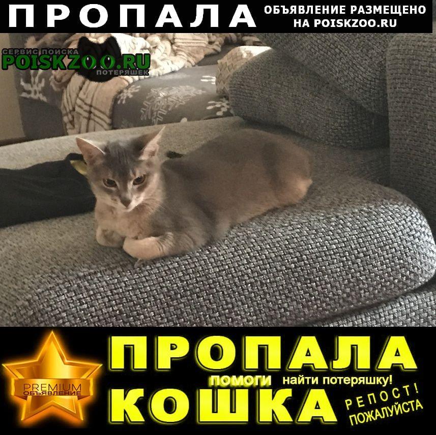 Пропала кошка помогите найти Самара