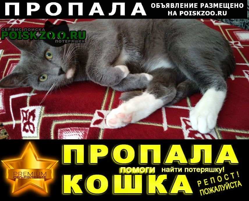Пропала кошка кот Долгопрудный