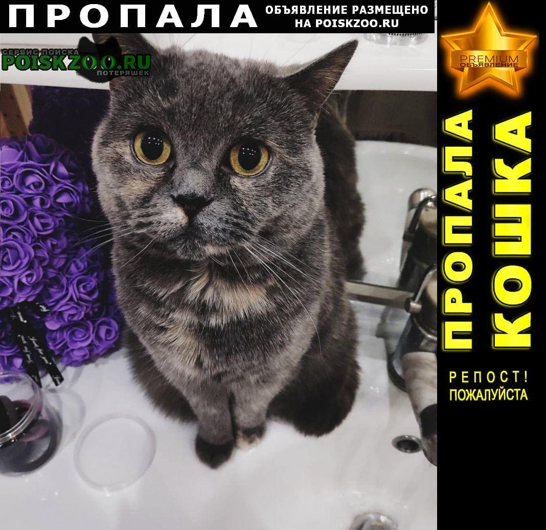 Пропала кошка бусинка Москва