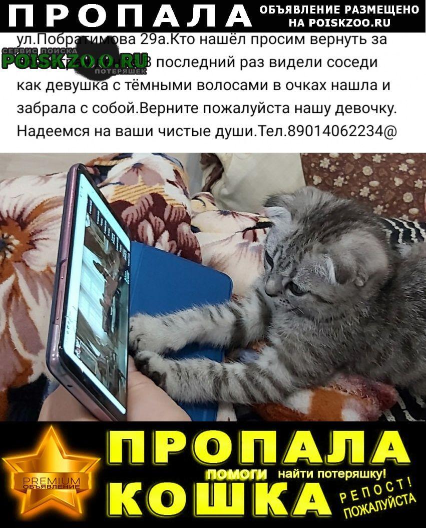 Люберцы Пропала кошка за вознаграждение