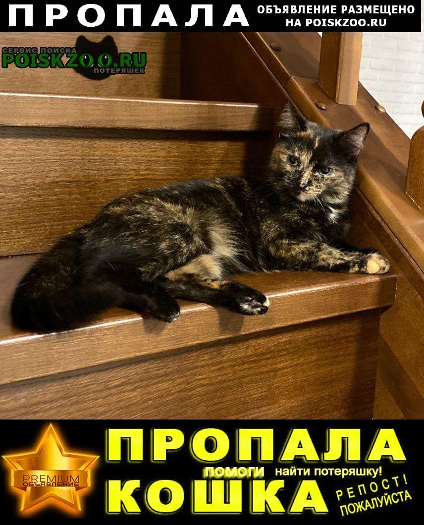 Пропала кошка просим вернуть за вознаграждение Кемерово
