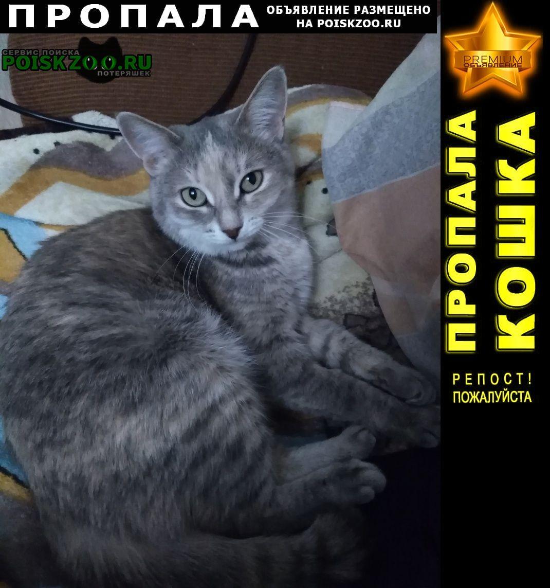 Пропала кошка Сызрань