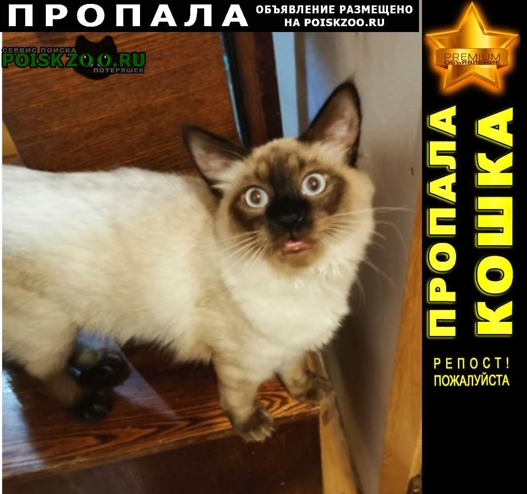Пропала кошка сиамский (тайский) кот Санкт-Петербург