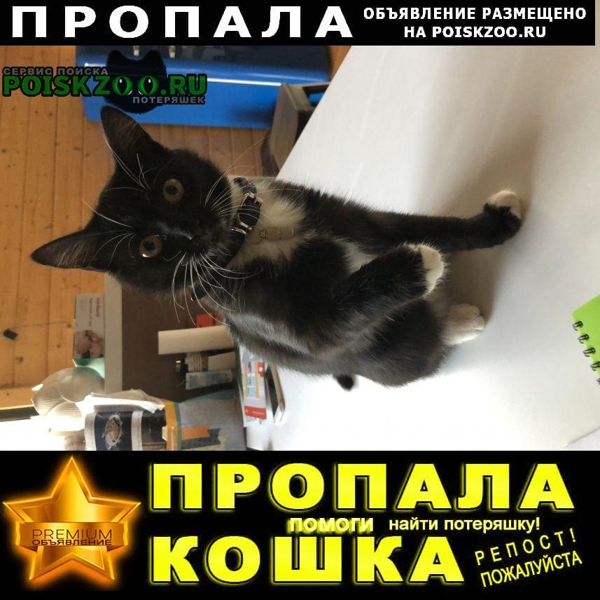 Пропала кошка Нарофоминск