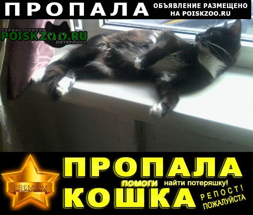 Пропала кошка кот Кисловодск