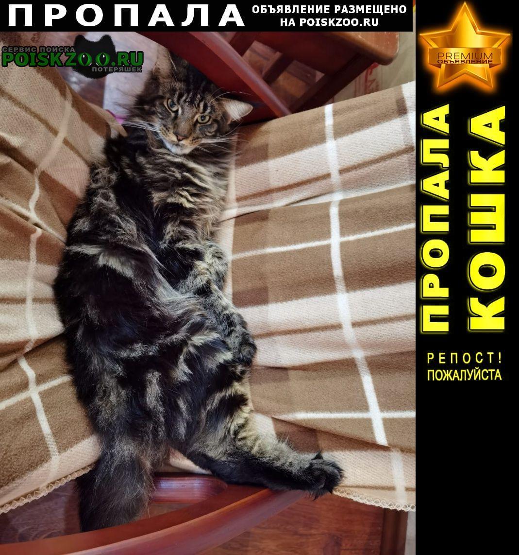 Пропал кот с.ракитное Хабаровск