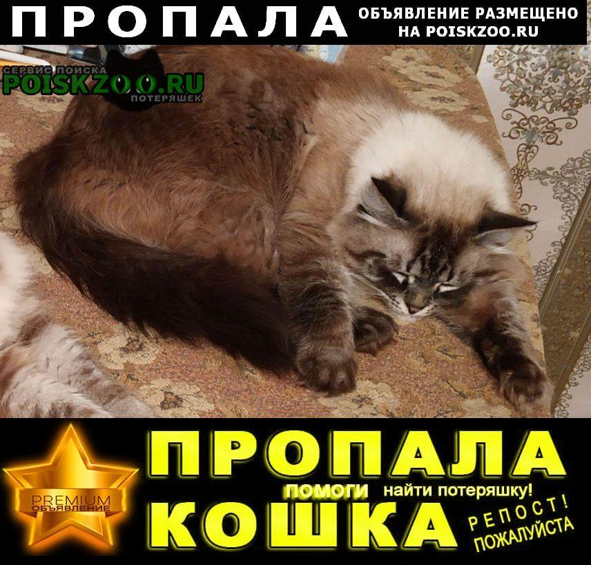 Пропала кошка Козельск