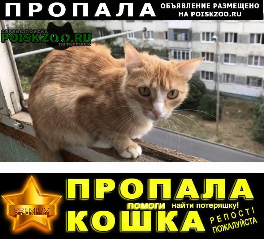 Пропала кошка Ставрополь