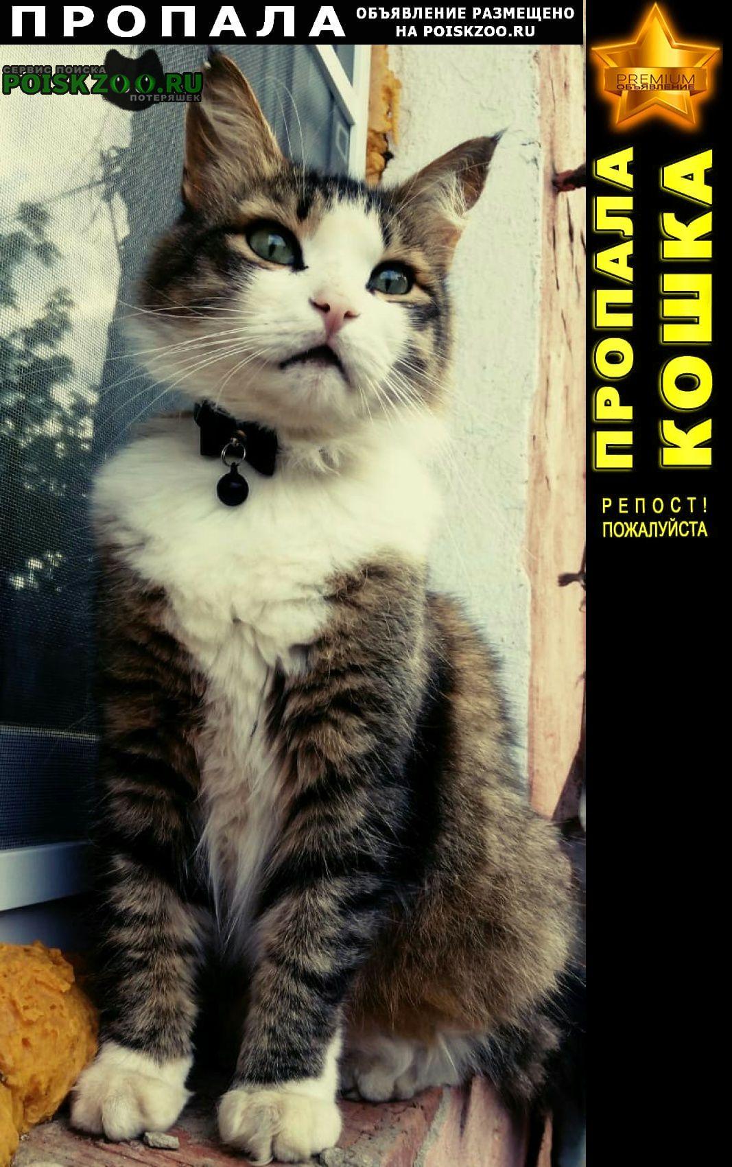 Пропала кошка помогите найти кота «васю» Хотьково