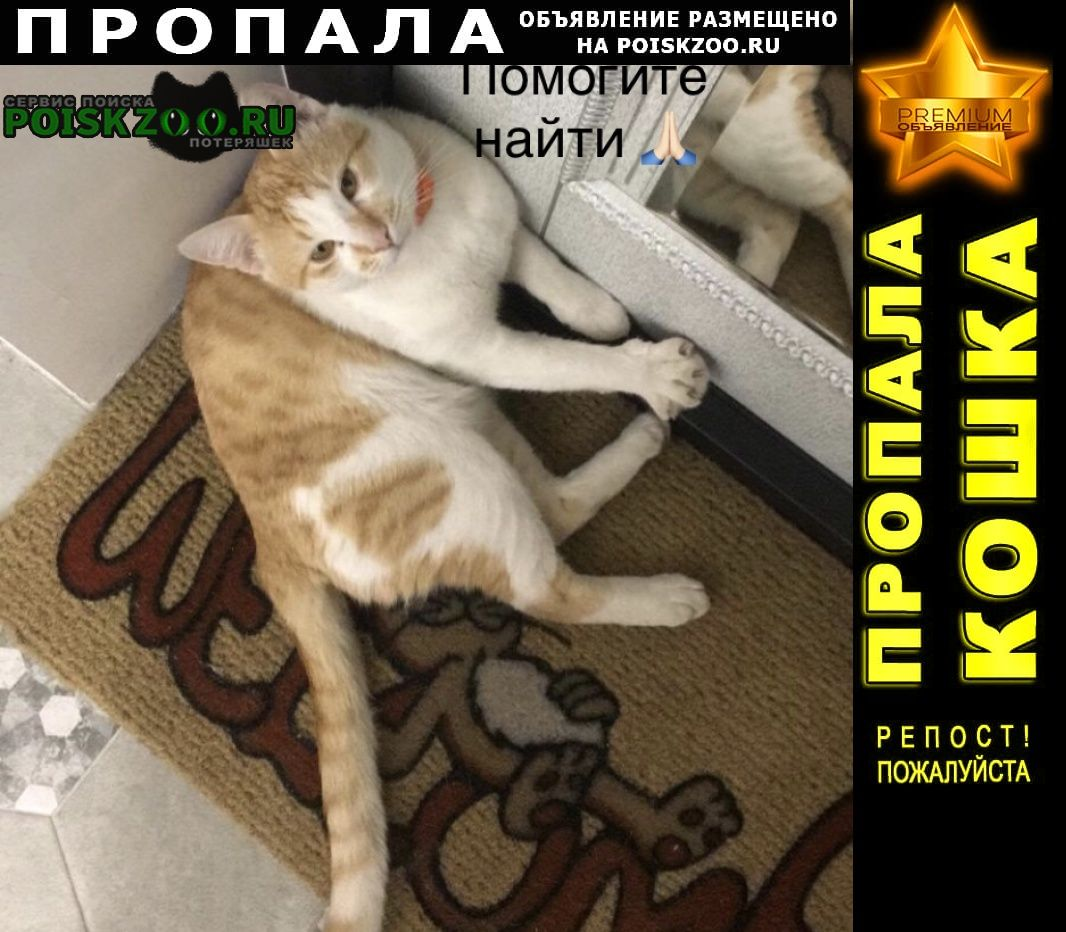 Химки Пропала кошка рыжий кот