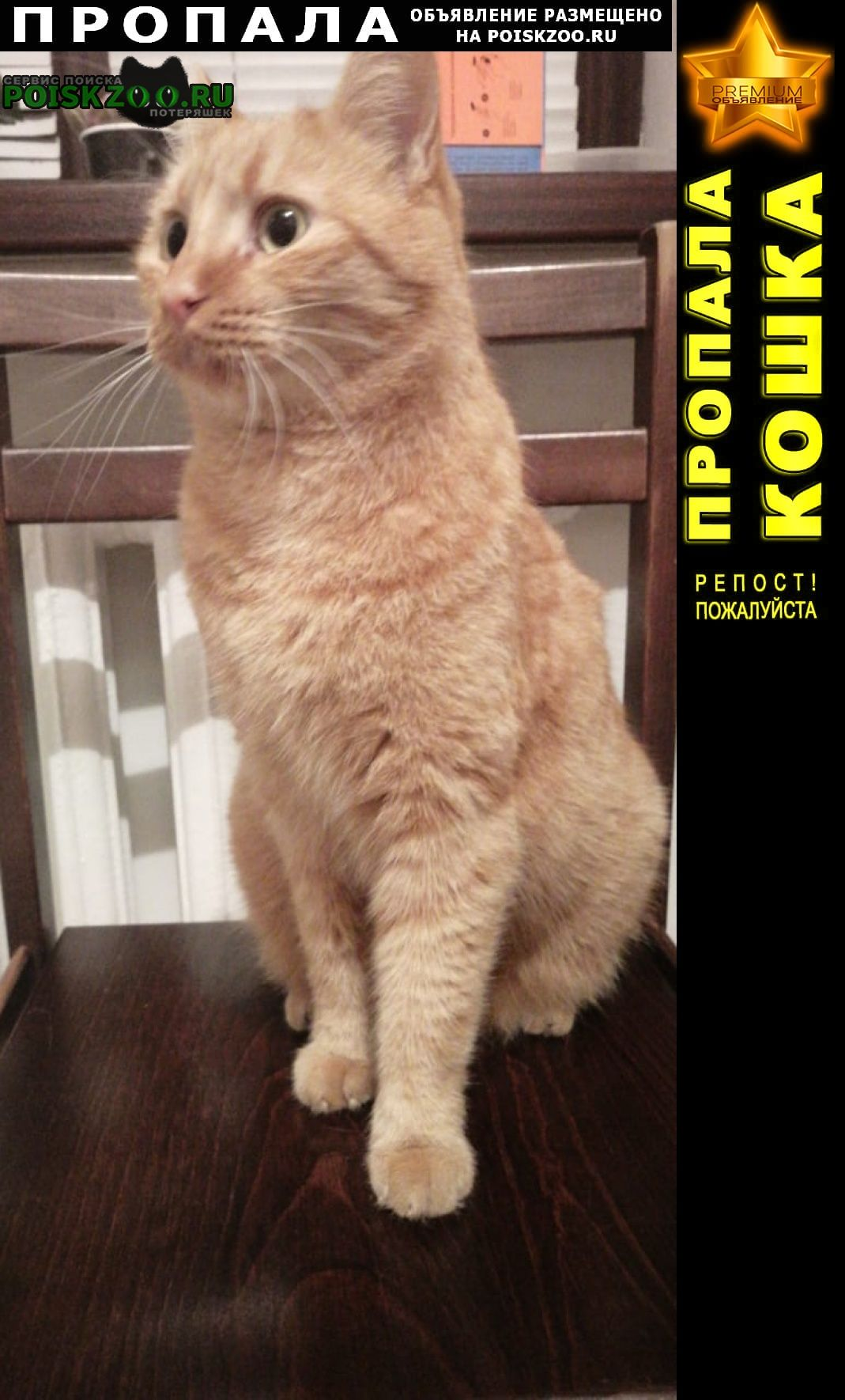 Пропала кошка кот Новороссийск
