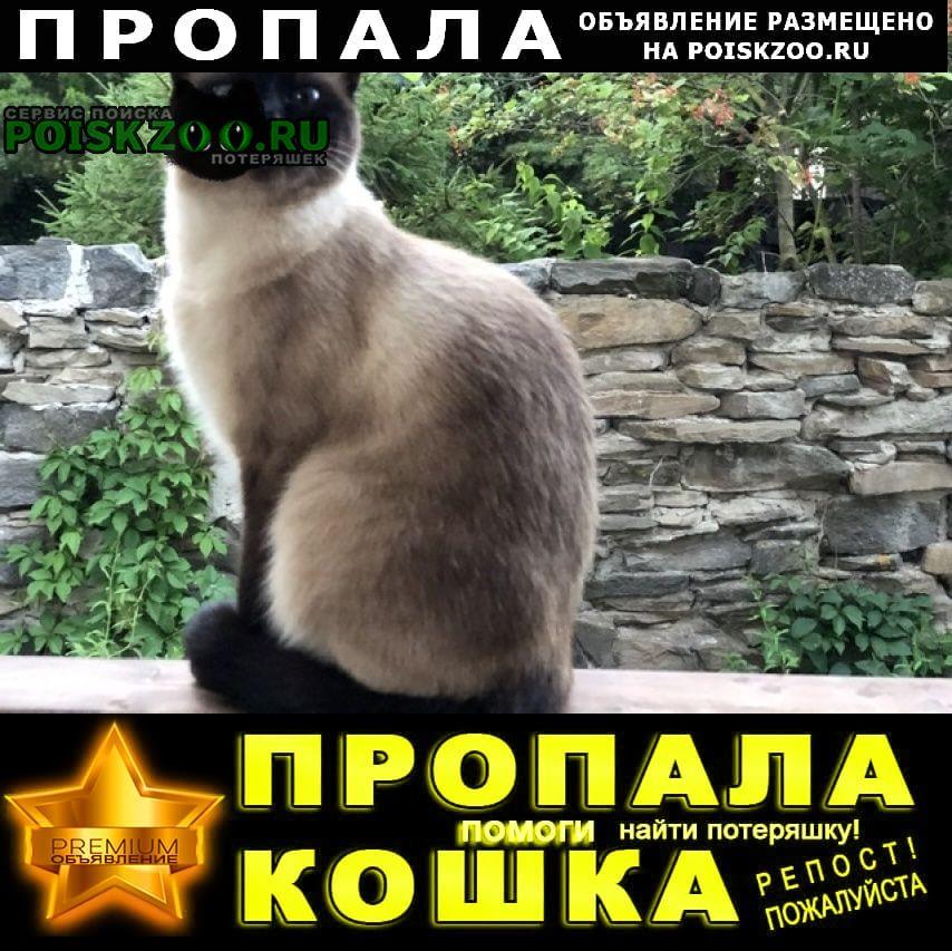 Пропала кошка в кагальнике в замостье Азов