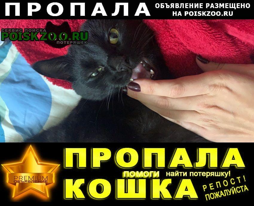Пропала кошка (кот) черного цвета Электроугли