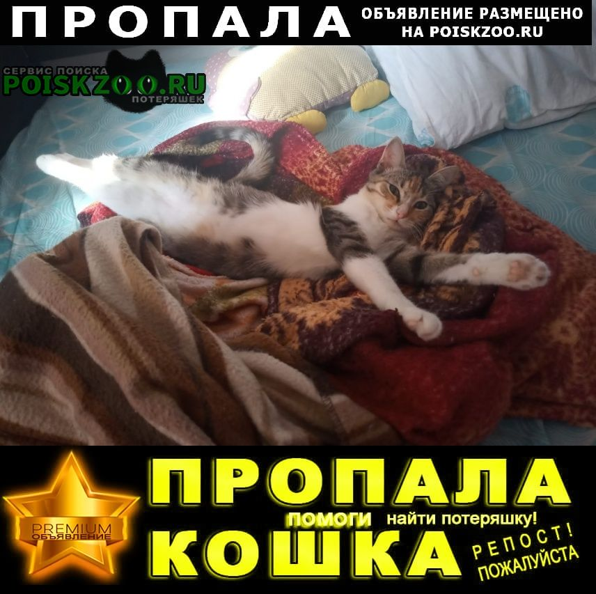 Пропала кошка Пятигорск