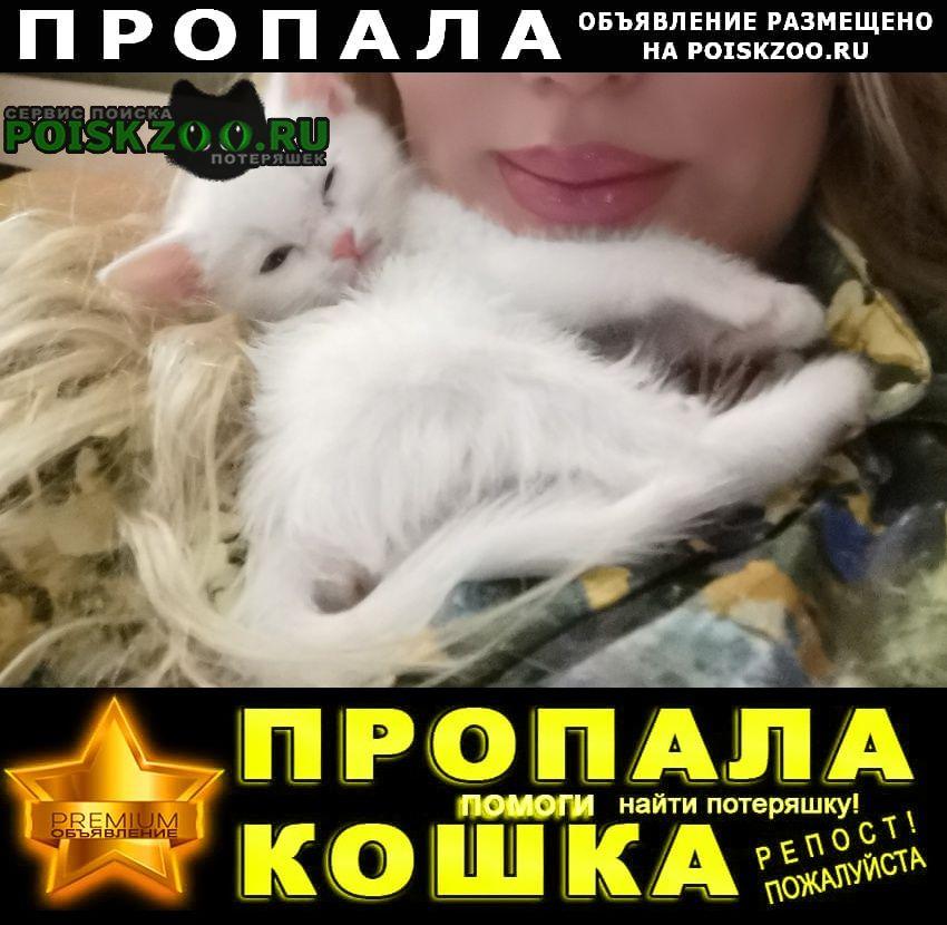 Пропал кот Ноябрьск