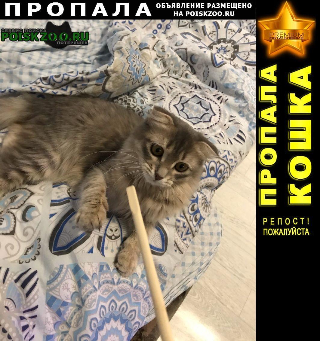 Пропала кошка юбилейный Саратов