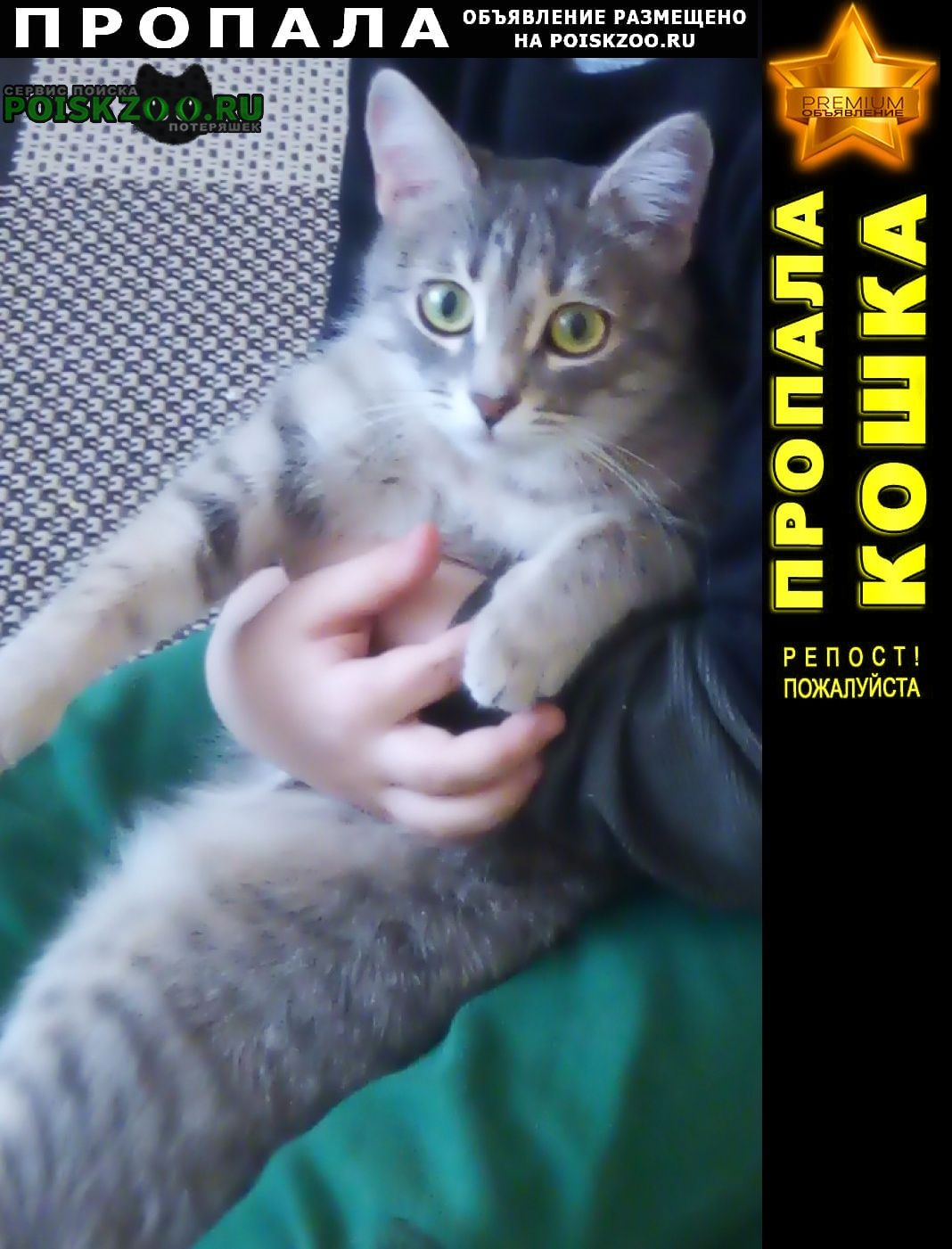 Пропала кошка Ижевск