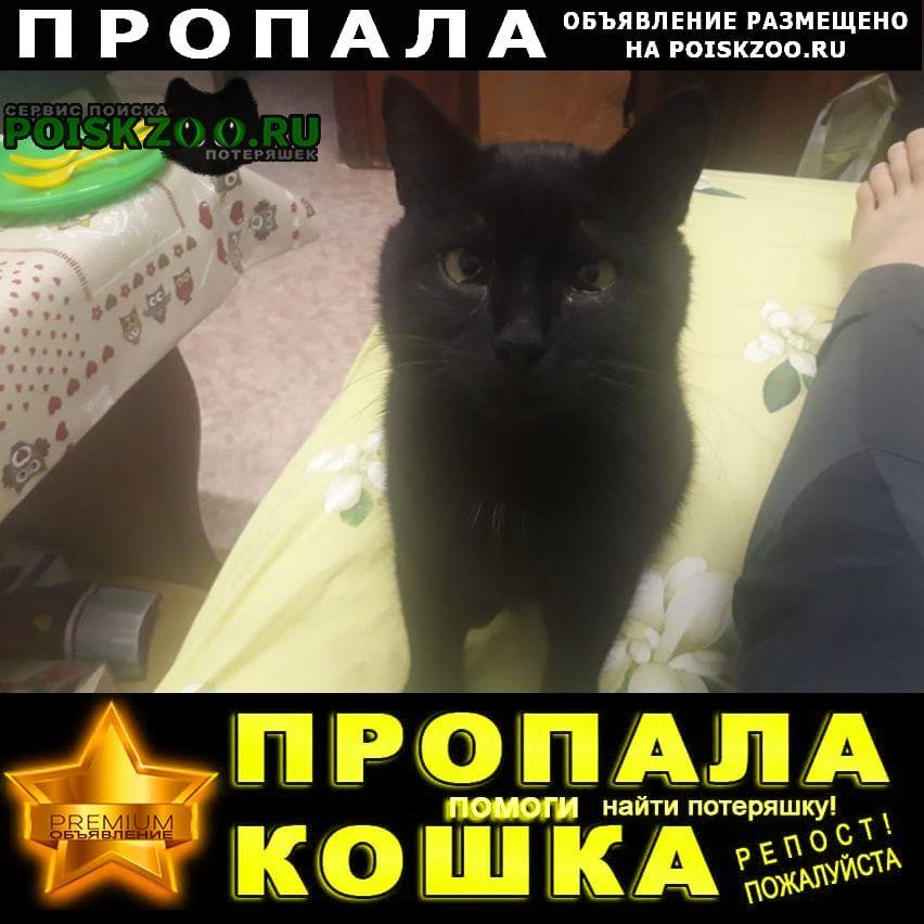 Пропал кот черный Казань