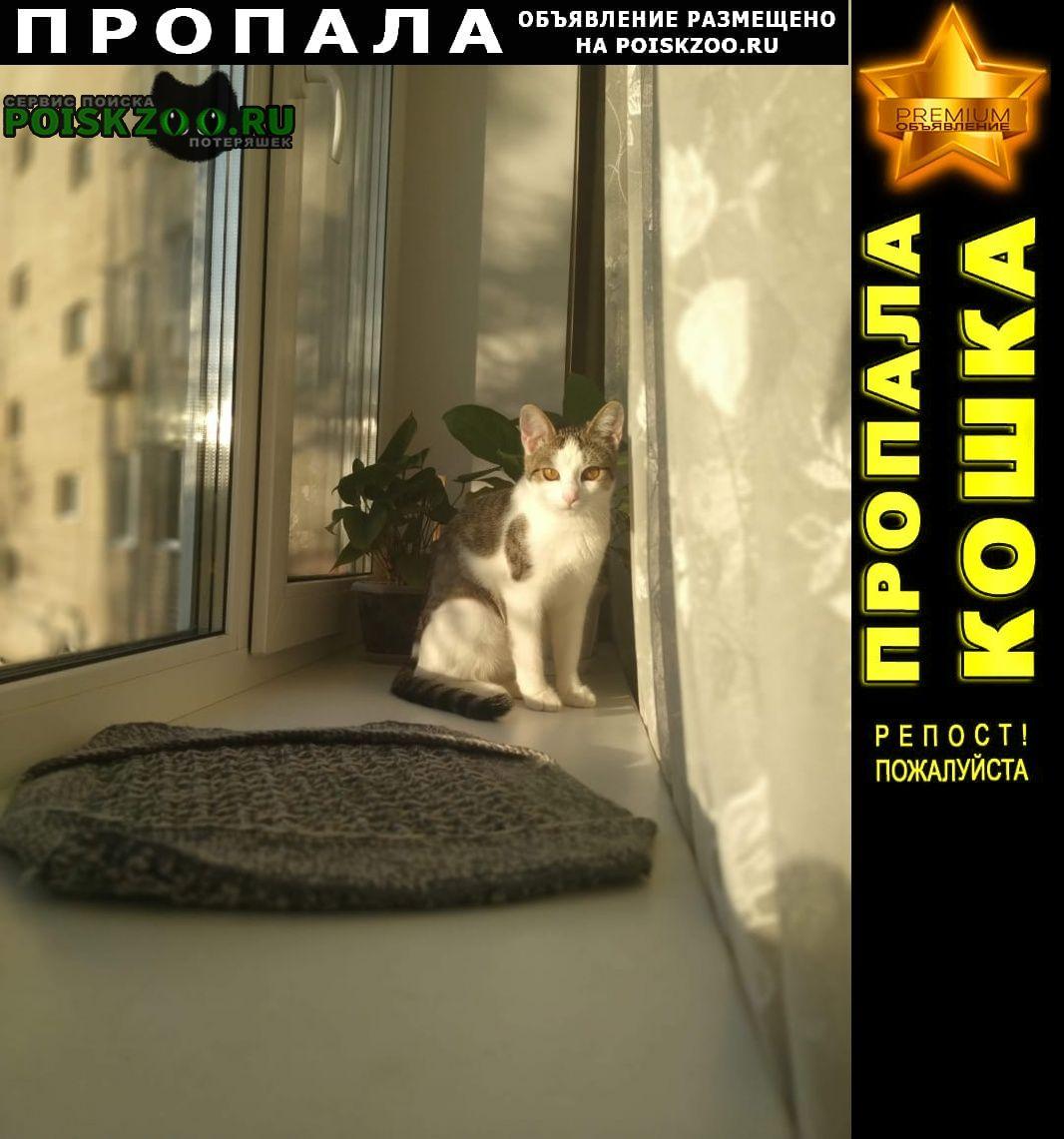 Пропала кошка домашняя. Саратов