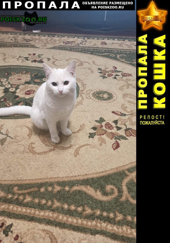 Быково (Московская обл.) Пропала кошка белая