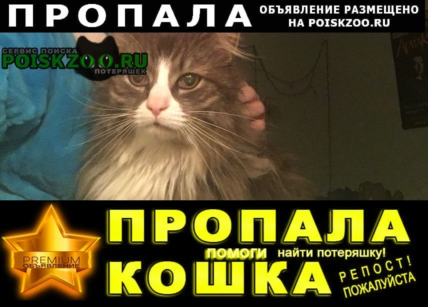 Пропала кошка кот элвис в районе ул. шевченко 2 Санкт-Петербург