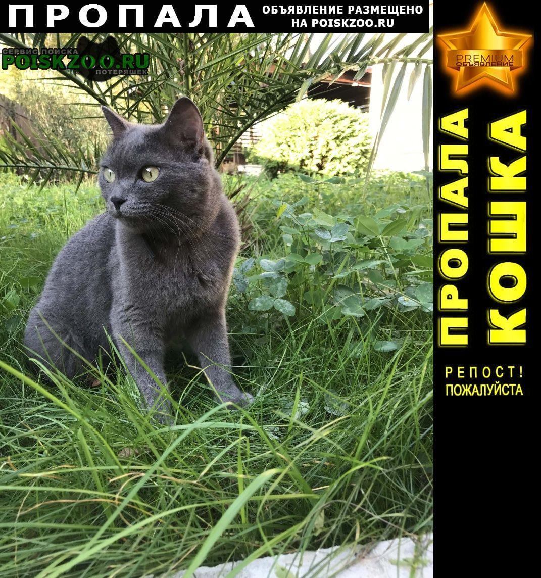 Пропала кошка кот Сочи
