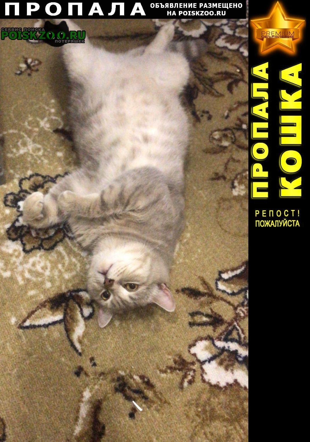 Пропал котик Геленджик